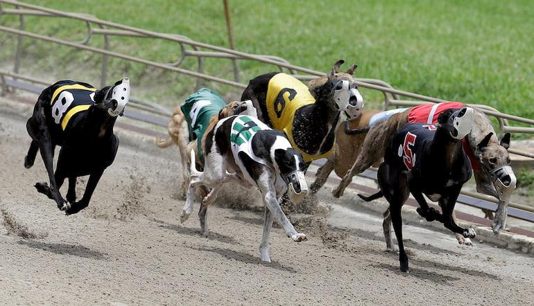Greyhound puppy derby betting strategies oberbettingen steakhaus brigada