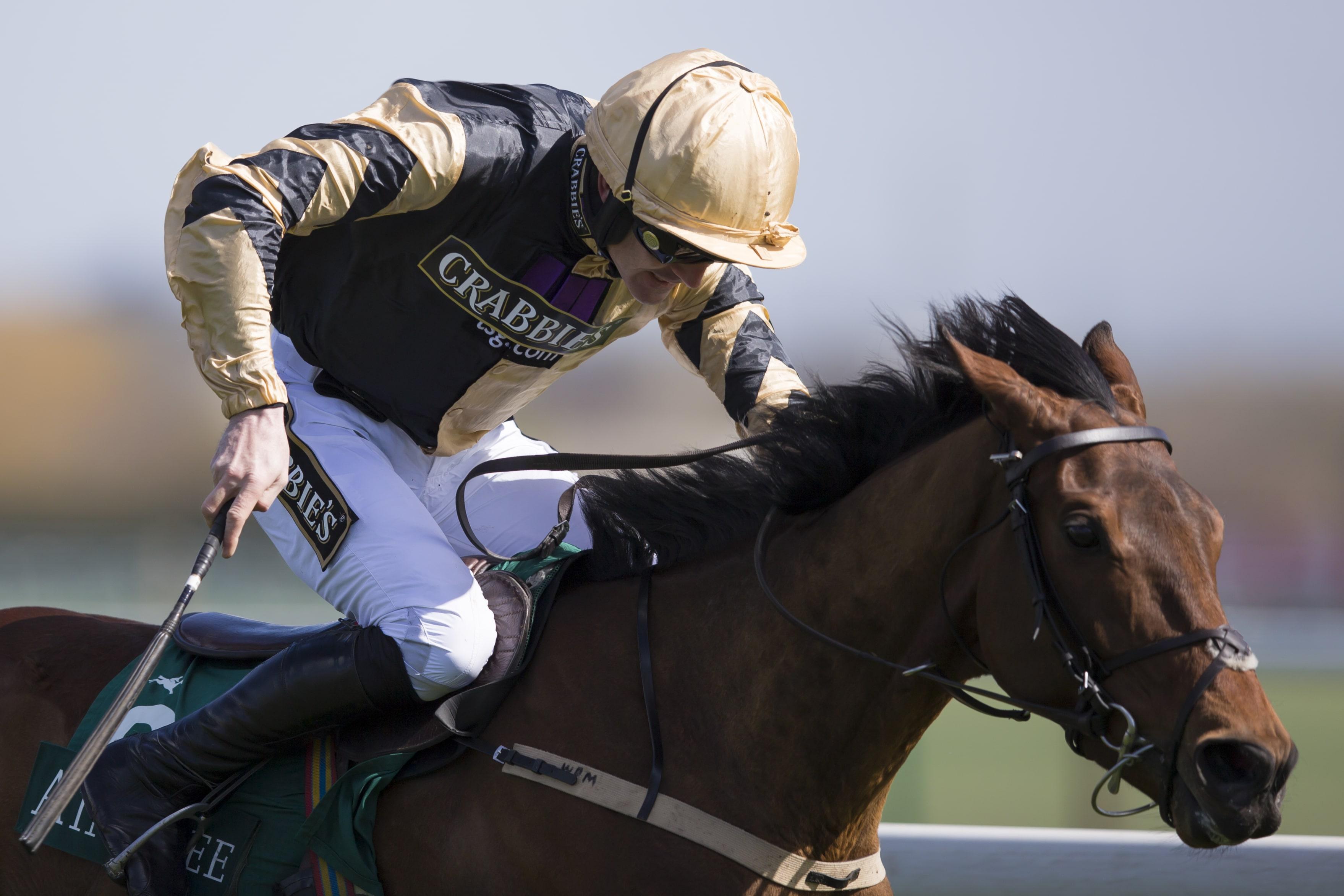 cheltenham supreme novices hurdle betting sites