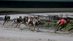 Guide to betting on greyhounds racing