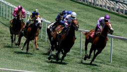 Different types of horse racing