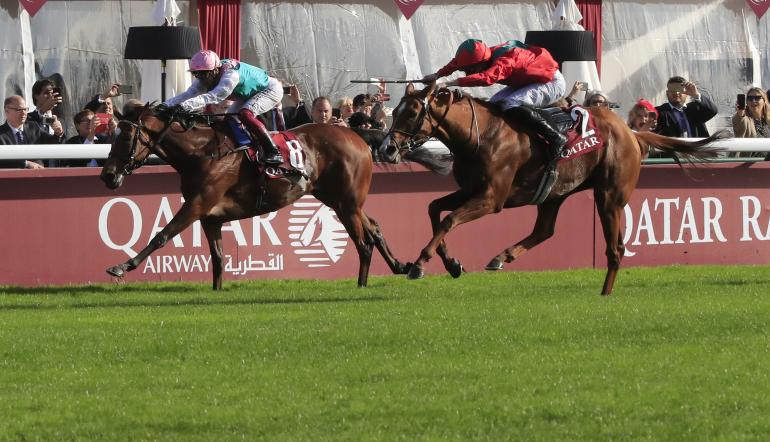 horse racing results and betting odds