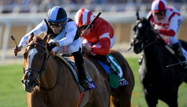 Cheltenham horse racing betting tips king line sports betting