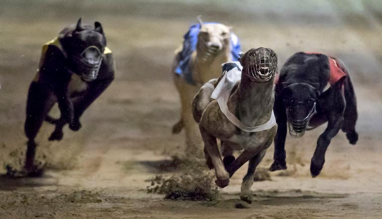 Uk greyhound racing betting tips arctic monkeys saturday night live performance i bet you look good on the