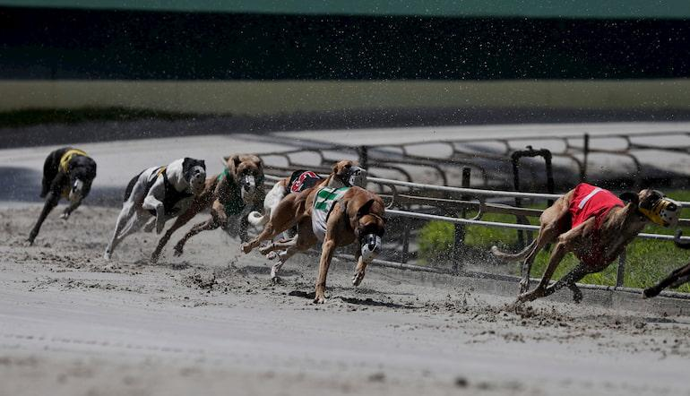 Greyhound racing betting terms sitris betting lines