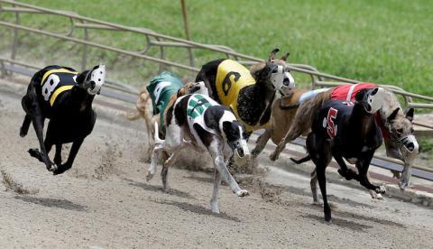 Dog racing betting terms glossary joe rogan sports betting
